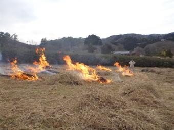 枯草を燃やして耕運に備える